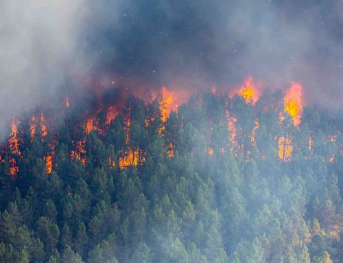 TETHIR AND PYREOS CONSORTIUM WINS £0.5M UK GRANT FOR  IOT SENSOR NETWORKS FOR FASTER FOREST FIRE DETECTION